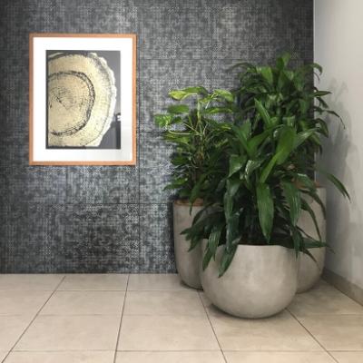happy plant pothos totem janet craig in concrete custom pots