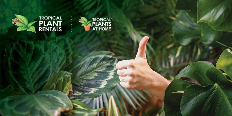 indoor plants and thumbs up