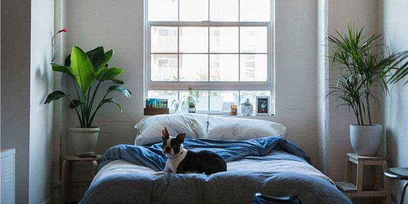 indoor plants in bedroom at home