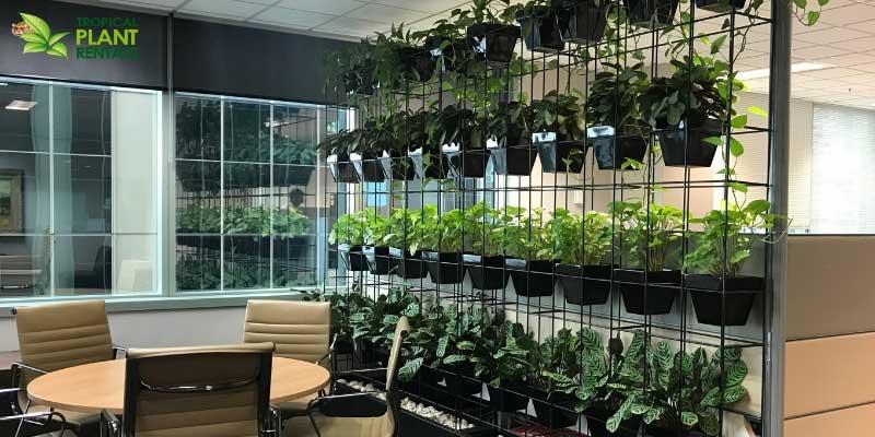 indoor plants vertical garden