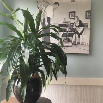 janet craig black luna pot in office