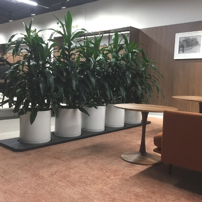 janet craig white planters in office