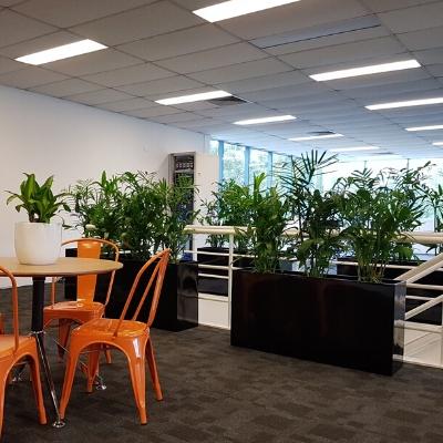 kentia palm black troughs office privacy screen 400mm x 400mm