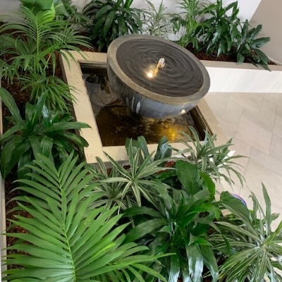 kentia palm janet craig dracaena waterfall feature