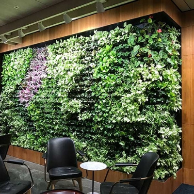 living green wall office display