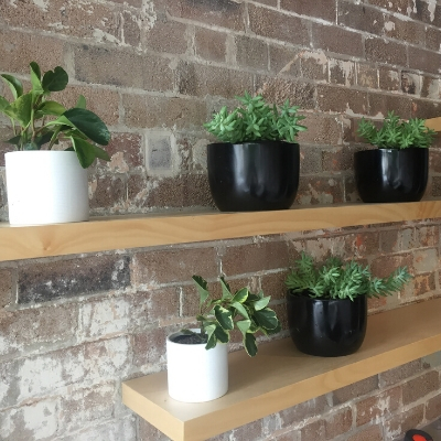 peperomia succulents black mini garden bowl shelf cafe
