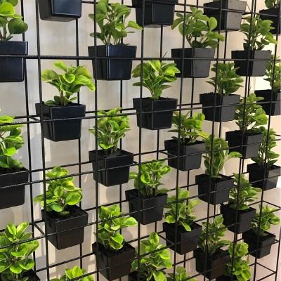 pot plant vertical garden display in office 1