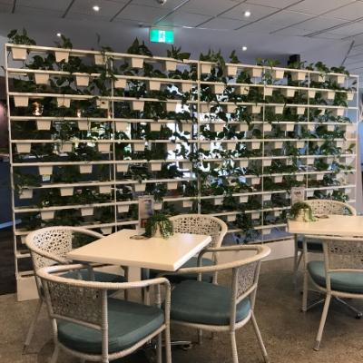 pot plant vertical garden privacy screen restaurant