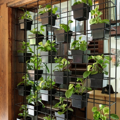 Living green wall office display - Indoor Plant Hire | Office Plant Hire Sydney