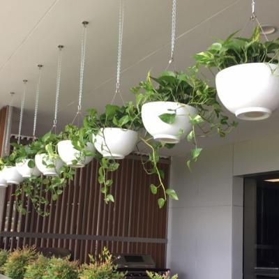 devils ivy in hanging white bowls