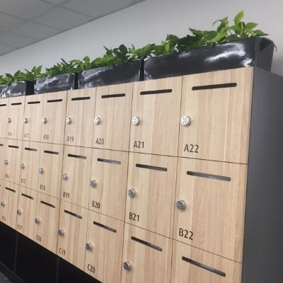 pothos troughs on cabinet