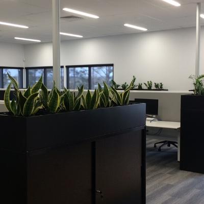 sansevieria black tambour units office