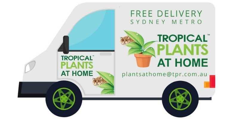 tropical plants at home van