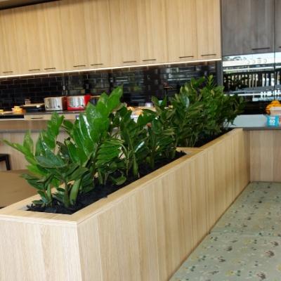 zanzibar gem office lunchroom joinery plants