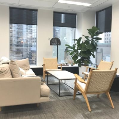 Fiddle leaf fig in white cone office plant - Indoor Plant Hire / Office Plant Hire