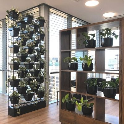 Pot plant wall - ppvg office partitioning room divider - Indoor Plant Hire / Office Plant Hire
