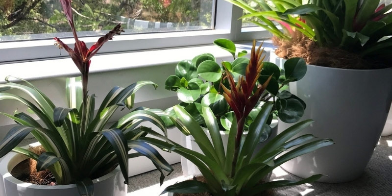 cluster office hire plants